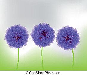 fiori blu, natura