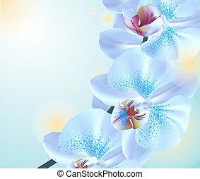 fiori blu, orchidea