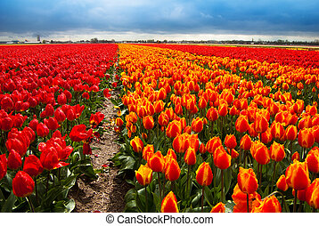 fiori, campo, fondo