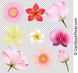 fiori, collezione, in, trasparente, fondo