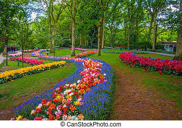fiori coloriti, percorsi, keukenhof, parco, lisse, in, olanda