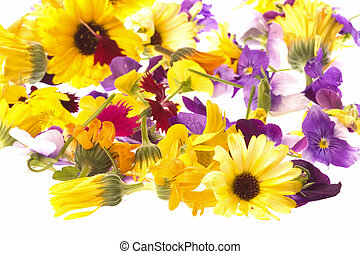 fiori, commestibile, isolato