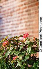 fiori, con, muro di mattoni, in, fondo