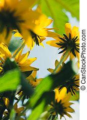 fiori, contro, cielo