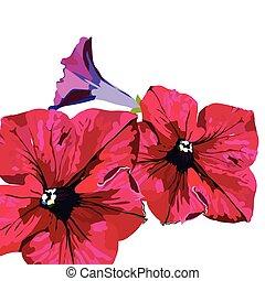 fiori, delicato, isolato