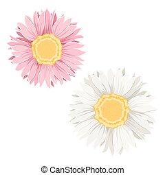 fiori dentellare, giallo
