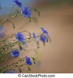 fiori, di, lino