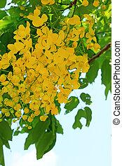 fiori dorati