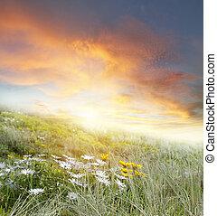 fiori, e, cielo