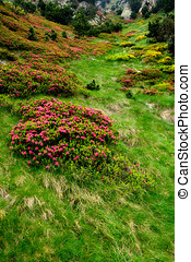 fiori, e, erba, in, vall, de, nuria, catalano, pirenei, spagna