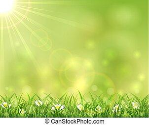 fiori, erba, soleggiato, fondo