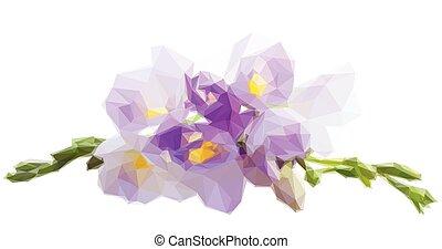 fiori, freesia