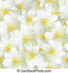 fiori, gelsomino