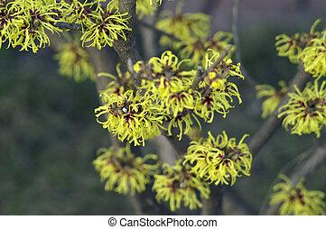 fiori, giallo