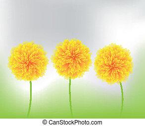 fiori, giallo, natura