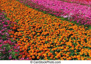 fiori, giardino, pieno
