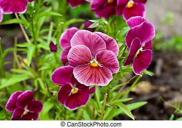 fiori, giorno pieno sole