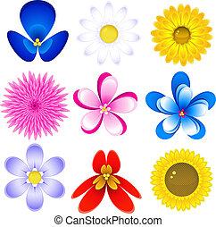 fiori, icona, set