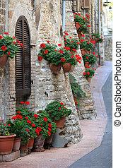 fiori, italia, strade, geranio, umbria, assisi