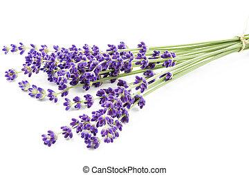 fiori, lavanda, angustifolia), (lavandula