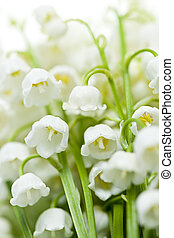 fiori, lily-of-the-valley