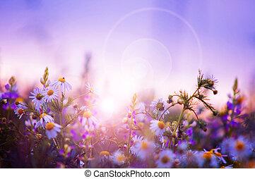 fiori primaverili, campo