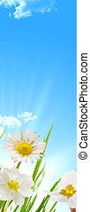 fiori primaverili, cielo blu, e, sfondo sole
