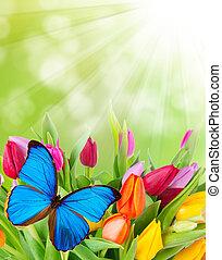 fiori primaverili, con, farfalla