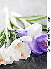 fiori primaverili, croco