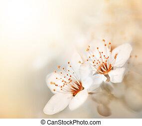 fiori primaverili, fiore, in, giorno pieno sole
