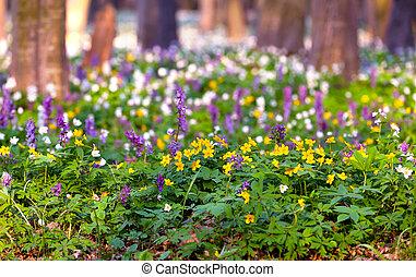 fiori primaverili, foresta