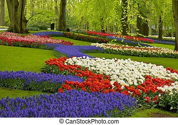 fiori primaverili, in, olanda, giardino