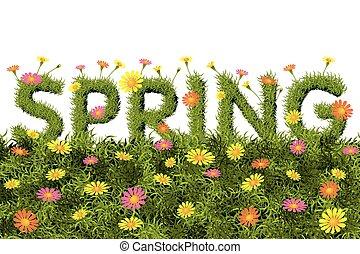 fiori primaverili, parola, campo