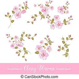 fiori primaverili, set, elementi