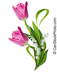 fiori primaverili, tulips, isolato, bianco, fondo