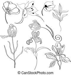fiori, set, 4