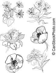 fiori, set, disegno, mano
