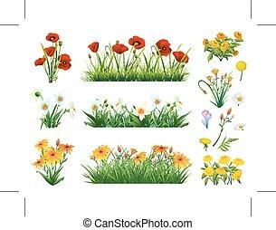 fiori, set, erba
