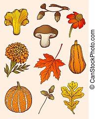 fiori, set, funghi, leaves.