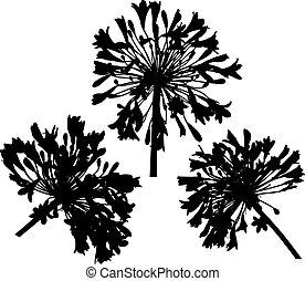 fiori, silhouette, tre, rotondo