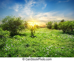 fiori, soleggiato, prato