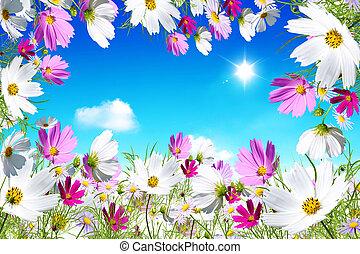 fiori, su, cielo