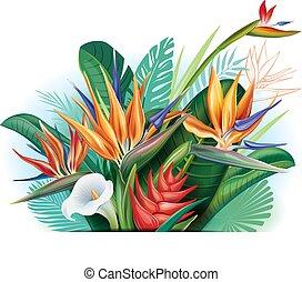 fiori tropicali, disposizione