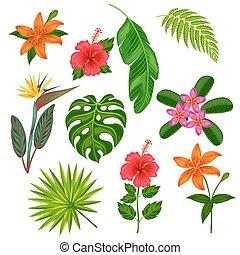 fiori tropicali, foglie, set, piante, stilizzato