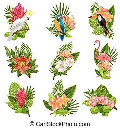 fiori tropicali, set, uccelli, pictograms