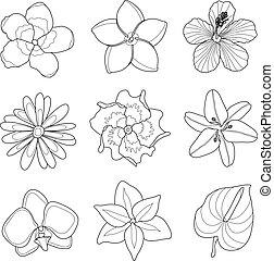 fiori tropicali, set, vettore, illustrazione