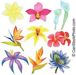 fiori tropicali, set, vettore