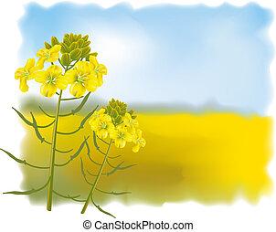 fiori, vettore, field., senape, illustration.