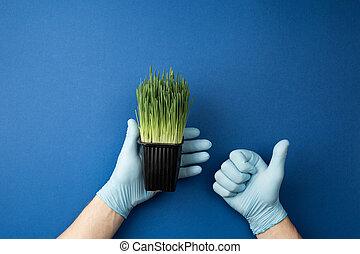 fioriera, mani, presa a terra, verde, guanti, oats.
