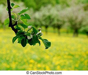 fiorito, albero, mela, ramo